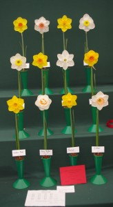 winning entry at the Northern Daffodil Show 2012 from http://daffodils.thenortherngroup.co.uk