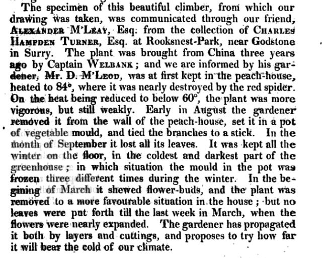 from Curtis Botanical Magazine, vol.56, 1819, p.242