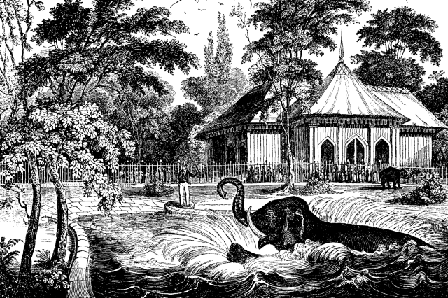 The elephant in his bath at Regent's Park, from