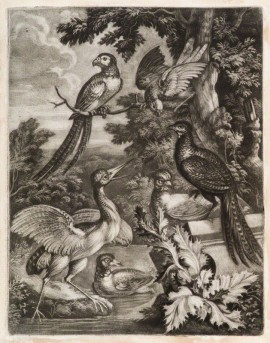 Exotic Birds by Robert Robinson, published by  John Smith, mezzotint, circa 1683-1695 National Portrait Gallery