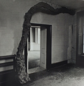 The wisteria at Carnwath House, Fulham which grew through the floor and departed through the wall! from Philip Davies,  Lost London 1870-1945, English Heritage.