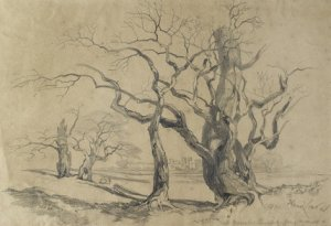 Oak Trees at Knowsley, Edward Lear, 1839 © Ashmolean Museum