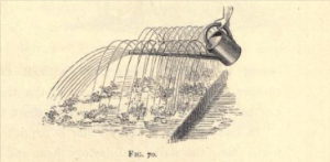 Watering can for seedlings, from Alfred Smee's My Garden: Its plan and culture, 1872