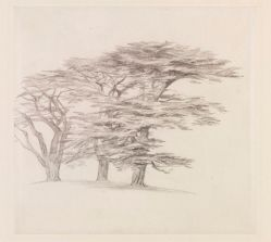 Pencil sketch of Cedars of Lebanon, Edward lear, c.1858-60 V&A