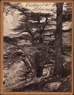 photo taken c.1850s-60s V&A