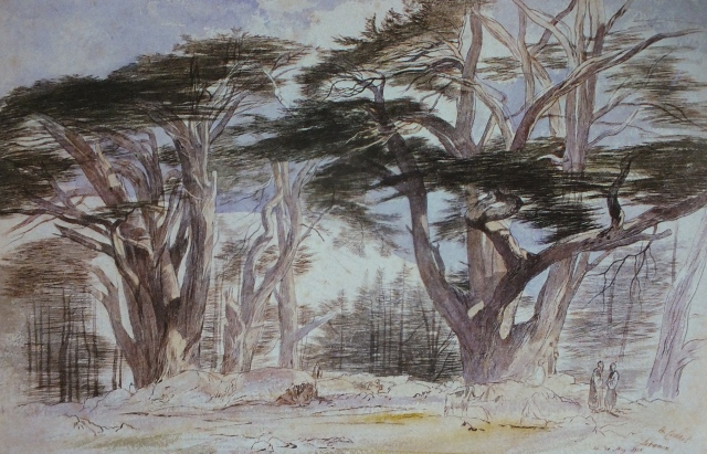 Cedars of Lebanon by Edward Lear