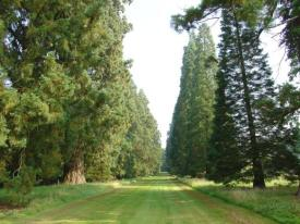 Part of the avenue at Cowdray http://www.redwoodworld.co.uk