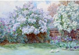 Lilacs, The Laurels, Oxhey