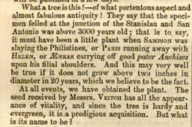 from Gardener's Chronicle 23rd Dec 1853
