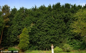Final cut: Christine Wright, of Norfolk, won a 24-year battle against these trees daily Mail 8th Sept 2010