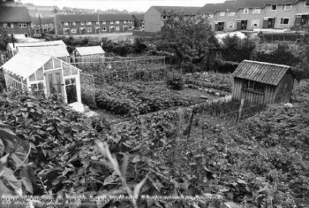 Hungerhill Gardens, St Ann's, 1978 Photo courtesy of Reg Baker