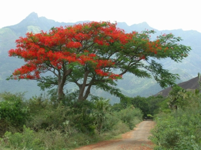 http://www.sprouthome.com/blog/2011/12/poinsettia-tree-in-mexico/