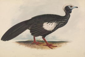 from  Gleanings from the menagerie and aviary at Knowsley Hall, 1846