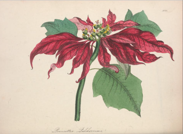 from The Floral Cabinet and Magazine of Exotic Botany, 1837