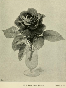 from The Book of the Rose by Rev Andrew Foster-Melliar, 1894
