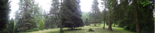 The pinetum at Leighton Hall from http://rfs.org.uk/media/53032/leighton-information-sheet.pdf