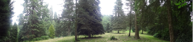 The pinetum at Leighton Hall from http://rfs.org.uk/media/53032/leighton-information-sheet.pdf
