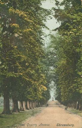 One of the Lime Avenues in Quarry Park, felled in 1946  from http://www.search.secretshropshire.org.uk