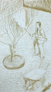 Percy spraying fruit trees in winter - and in his trademark jacket, tie and nice shoes