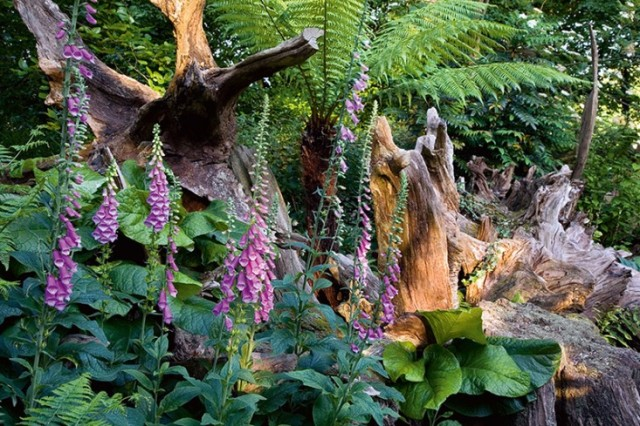 The stumpery at Highgrove http://www.gardenista.com/posts/at-home-with-prince-charles-a-garden-ramble-at-highgrove