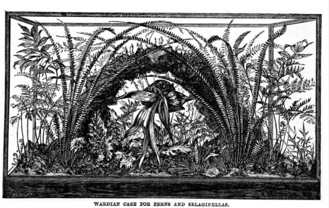 from John Mollison, The New Practical Window Gardener, 1872