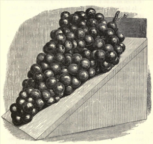 from David Thomson, Handy Book of Fruit culture under Glass, 1881