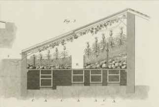 Pine house from Abraham Rees, Cyclopaedia, [Plates vol.3], 1820.