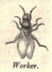 from Edward Bevan's The Honey Bee, 1827
