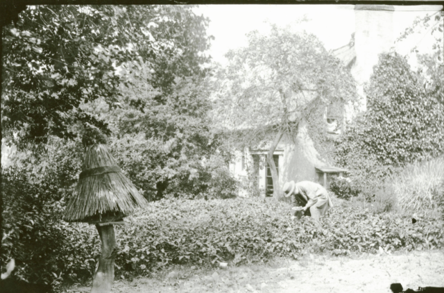 A straw covered skep in a  garden at  Lugwardine, Herefordshire, by Alfred Watkins c.1890