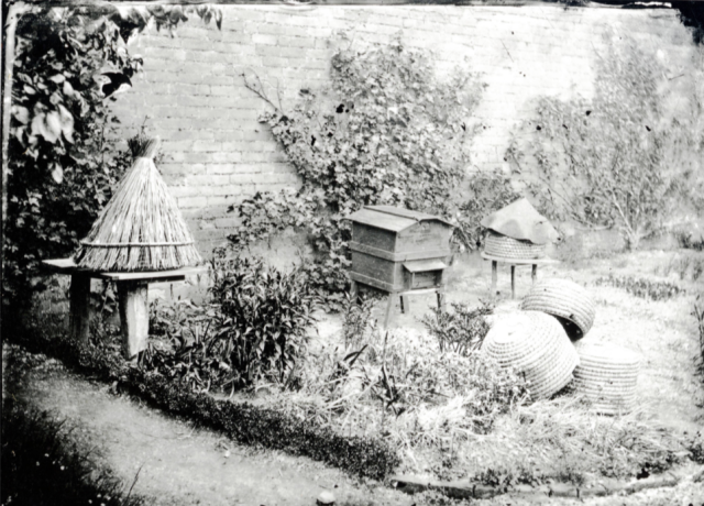 'My first frame hive'  by Alfred Watkins showing both  modern hive and old straw skeps side by side in his garden. c.1880 http://www.herefordshirehistory.org.uk