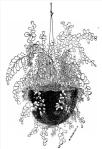 from John Mollison, The New Practical Window Gardener, 1877