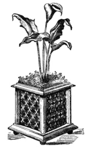 Ornamental Vase with Lily of the Nile and Selaginella, from  John Mollison, The New Practical Window Gardener, 1877