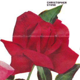 Christopher Stone http://bulbnrose.x10.mx/Roses/Rose_Pictures/C/ChristopherStone.html