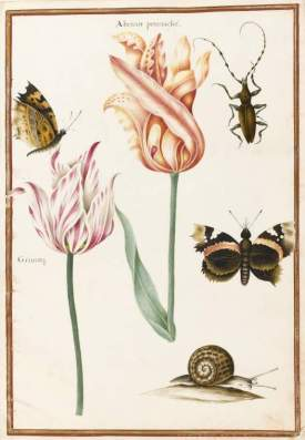 Two broken tulips, beetle, and a snail  Nicolas Robert,  1614-1685] Fitzwilliam Museum, Cambridge