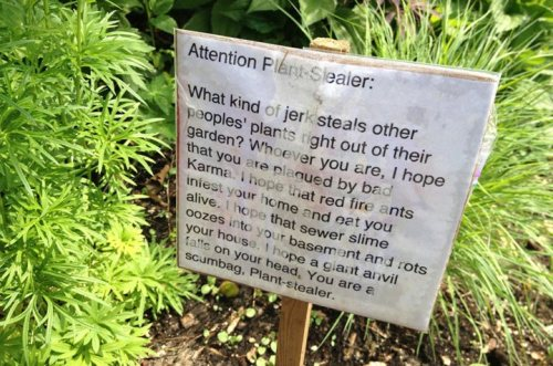 One angry gardener's reaction! http://globalnews.ca/news/1399882/angry-plant-theft-victim-posts-warning-note-to-dahlia-snatchers/