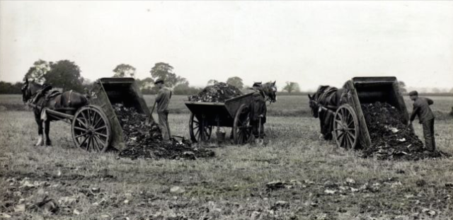 Night Soil collectors emptying their carts onto allotment land - © Hull City Council, Hull Public Health Department Photograph