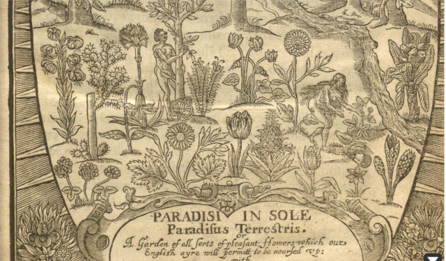detail from the title pge of Paradisi in sole paraidus terrestris, John Parkinson, 1629