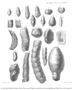 from William Buckland's On the discovery of coprolites, or fossil faeces, in the Lias at Lyme Regis, and in other formations. Transactions of the Geological Society of London, second series 3: 223-236