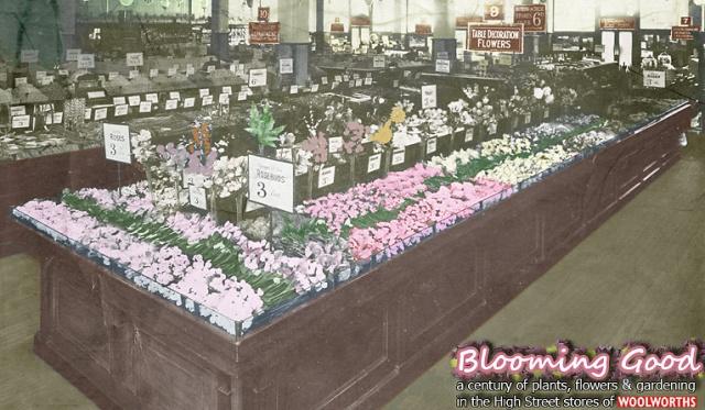 hg-bloominggood