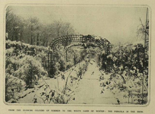The pergola in the snow [at Woodlands?] from Illustrtaed London News, 17th Januray 1914