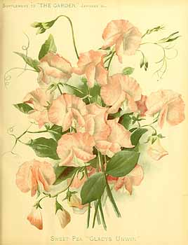Gladys Unwin from The Garden. , vol. 67: (1905)