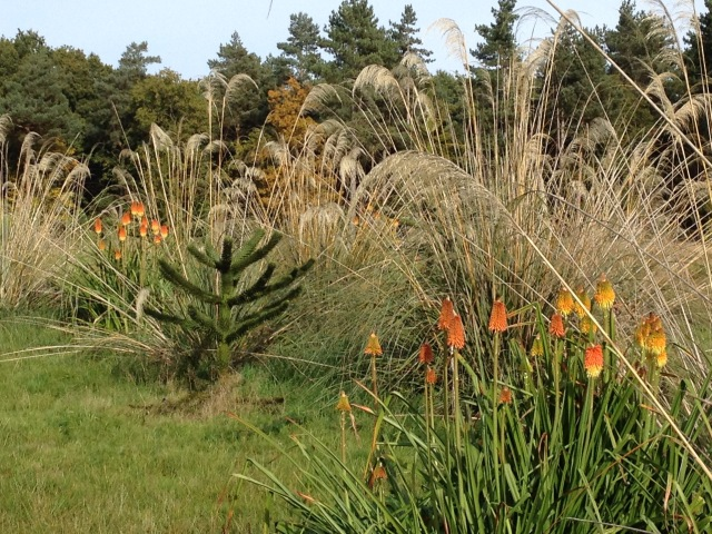 Araucraia, Cortaderia and Kniphofia in Gondwanaland, David marsh 2015