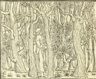 Polyphilo enters the grove from Hypnerotomachi Polyphili, 1499 edition