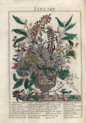 January from Thee Flower Garden Display'd, 1734