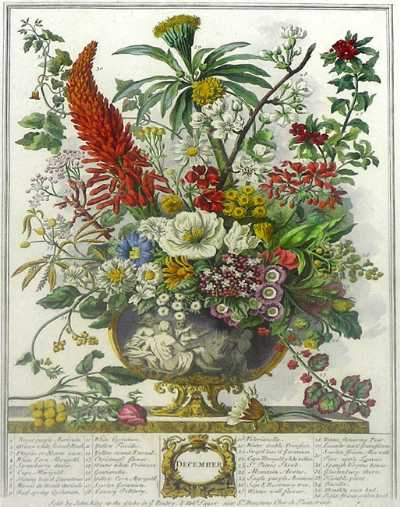 December from Furber's Twelve Months of Flowers, 1730