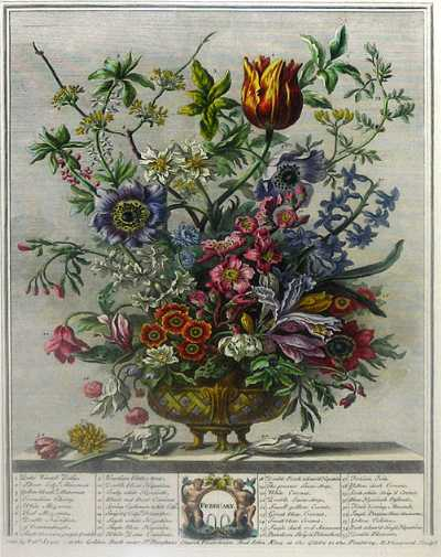 February from Furbers Twelve Months of Flowers, 1730