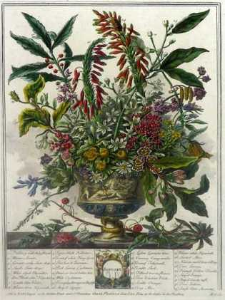 Januray, from Furber's Twelve Months of Flowers, 1730