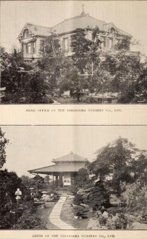 1909 catalogue