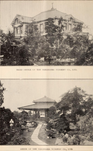 1909 catalogue