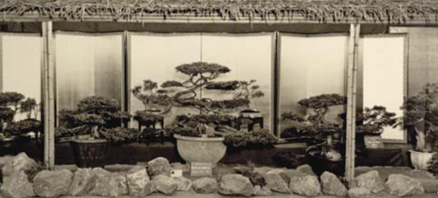 Larz Anderson's display at the 1933 New England Spring Flower Show from Tredici's article